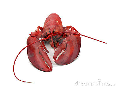 Lobster - steamed