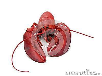 Lobster - steamed