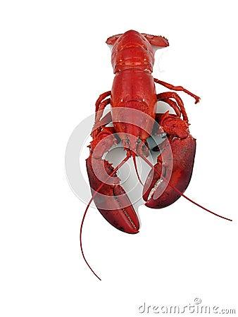 Lobster - steamed 2