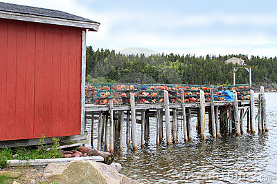 Lobster traps and buoys on wooden pier
