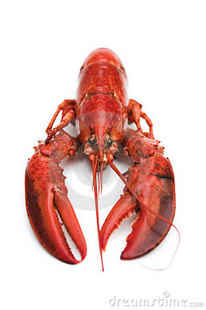 Lobster on white
