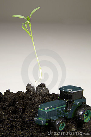 Local Harvest Concept, Plant Sprout, Toy Tractor