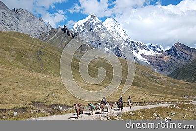 Local Peruvian horseman carrying goods in Peru Editorial Image