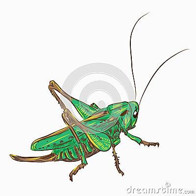 Free Locust Royalty Free Stock Photo - 26446695