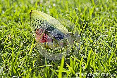 Locust Tacking Flight 02