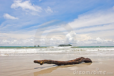 Log at the Beach