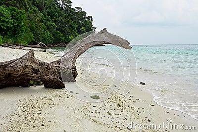Log on a beautiful tropical beach