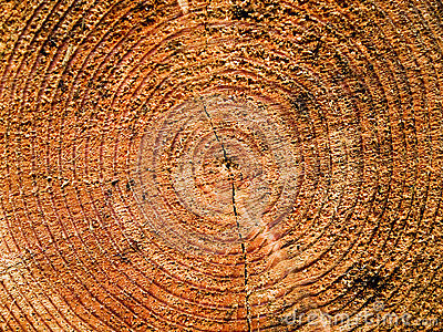 Log growth rings