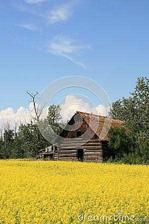 Free Log House And Canola Stock Image - 2788211