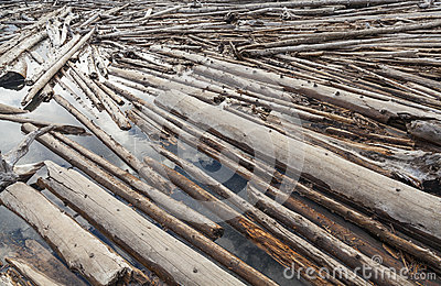 Log Jam of Tree Trunks Floting on a River