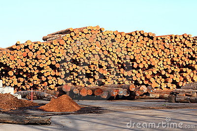 Log Pile in the NW