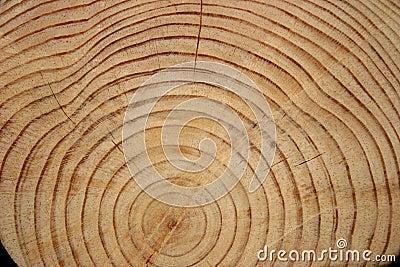 Log Rings
