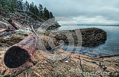 Log On Rocky Shoreline