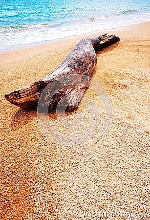 Log washed ashore
