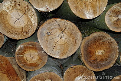 Logged trees background texture