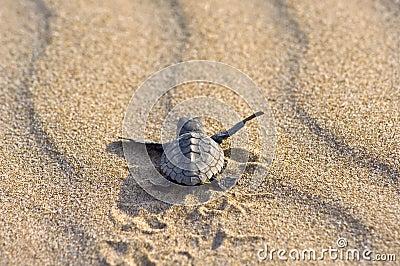 kikelő teknősök