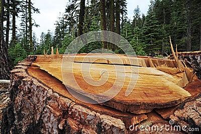 Logging Aftermath