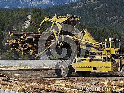 Logging - British Columbia - Canada
