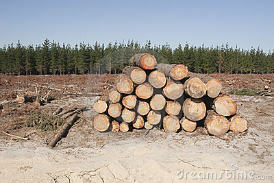 Logging in a forest