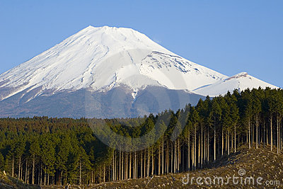Logging in Japan