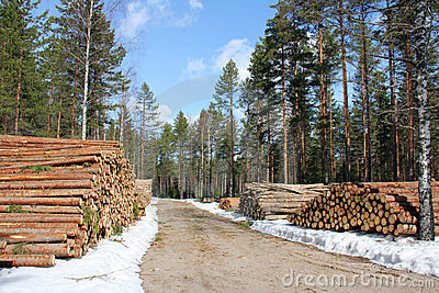 Logging Road at Spring