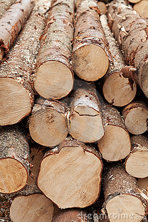 Free Logs Stock Photography - 22201472