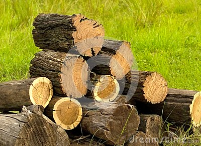 Logs cut with chainsaw for winter firewood