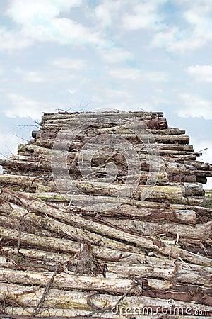 Logs high piled