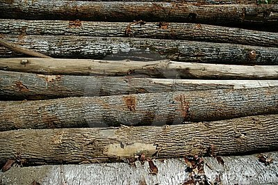 Logs horizontal