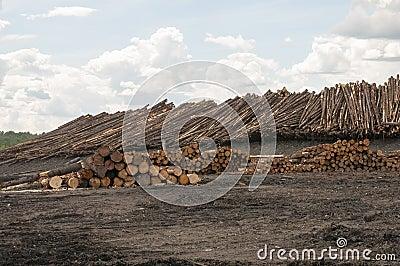 Logs no moinho da madeira serrada