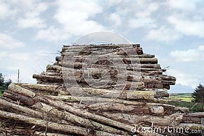 Logs piled high