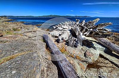 Logs resting on a coastal beach