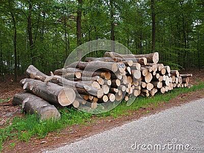 Logs on roadside