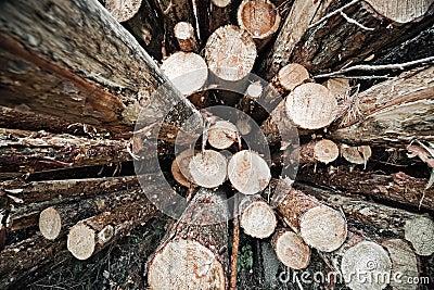Logs store