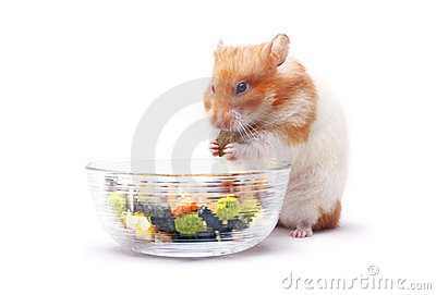 Lois the Hamster