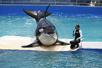 Orca Killer Whale in Tank