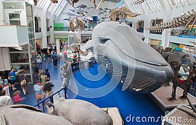 London, Natural History Museum Editorial Photo