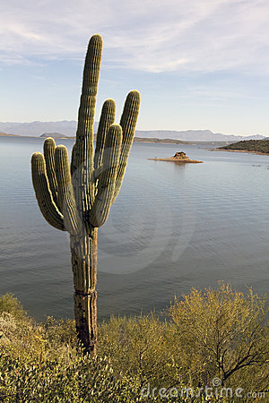 Free Lone Arizona Desert Cactus And Lake Stock Photography - 17392762