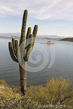 Lone Arizona Desert Cactus and Lake