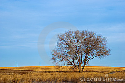 Lone Bare Tree in Winter on the Prairie