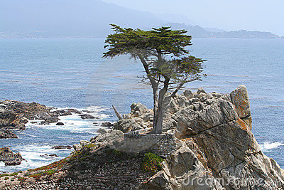 Lone Cypress on 17-Mile Drive Editorial Photo