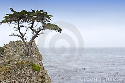 Lone cypress Editorial Photography