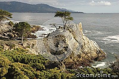 Lone Cypress, Carmel, CA