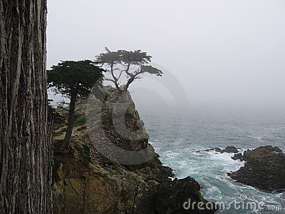 The Lone Cypress Tree Editorial Photography