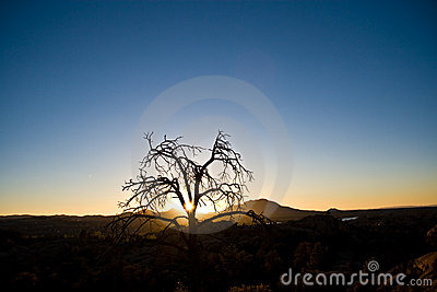 Lone desert tree at sunset