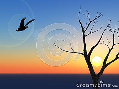 Lone Eagle Sunset