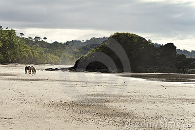 Lone Horses Beach Front, Costa Rica