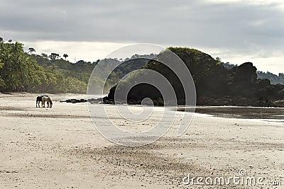 Lone Horses Beach Front, Costa Rica