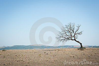 Lone and leafless tree rises on the wasteland