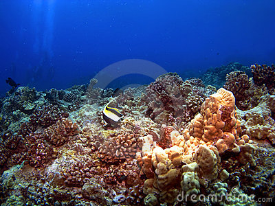 Lone Moorish Idol